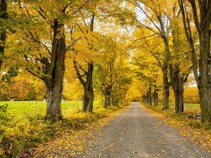 Photo de paysage d'automne 4