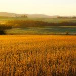 Photo de paysage d'automne