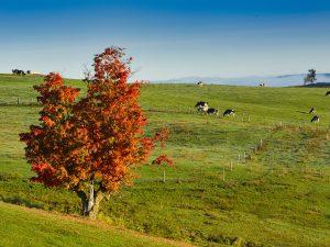 Photo de paysage d'automne 2