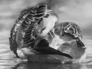 Photo d'oiseaux 8