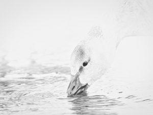 Photo d'oiseaux 9