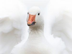 Photo d'oiseaux 7