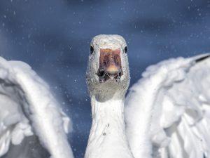 Photo d'oiseaux 6
