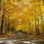 Photo de paysage d'automne 8