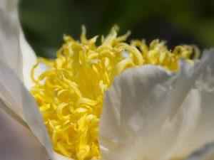 Photo de fleurs