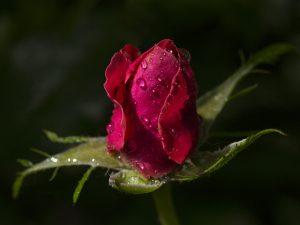 Photo de fleurs 4