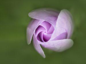 Photo de fleurs 5