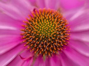 Photo de fleurs 7