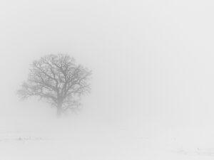 Paysage d'hiver 5