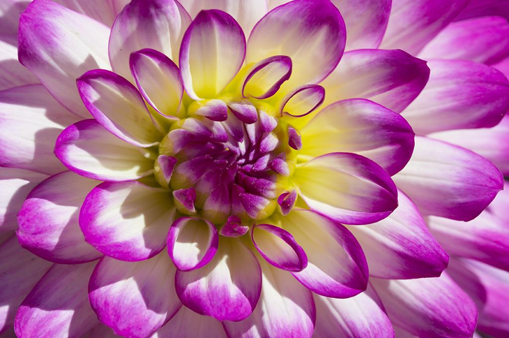 Photo de fleurs 2