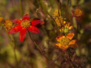 Photo de fleurs 3