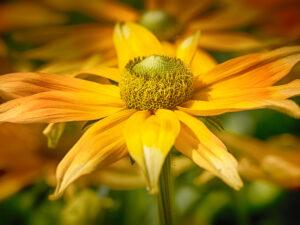 Photo de fleurs 6